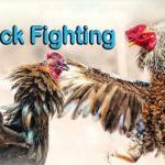 How to Bet Fun88 Cock Fighting – Virtual Sports – ₹100 Bonus